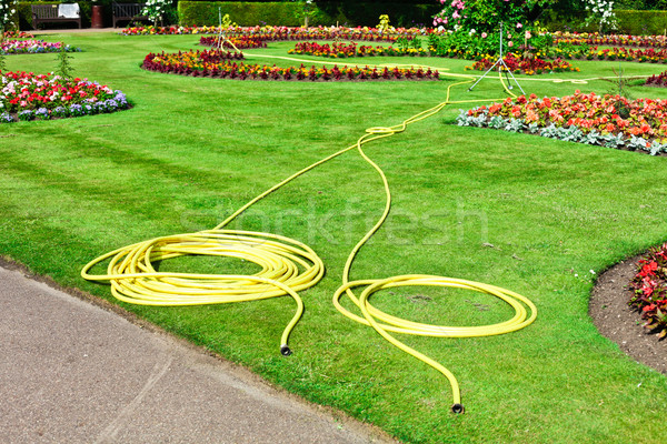 Garden hosepipes Stock photo © trgowanlock