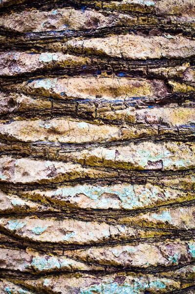 Tree bark Stock photo © trgowanlock