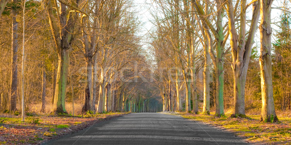 woodland Stock photo © trgowanlock