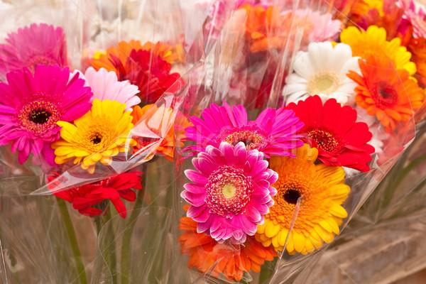 Virágok színes természet nyár piros ajándék Stock fotó © trgowanlock