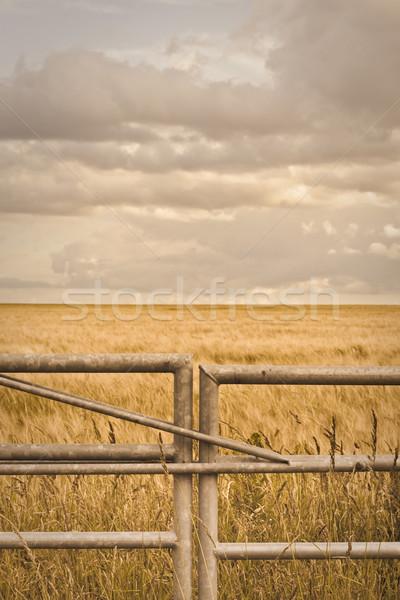 Farm gate Stock photo © trgowanlock