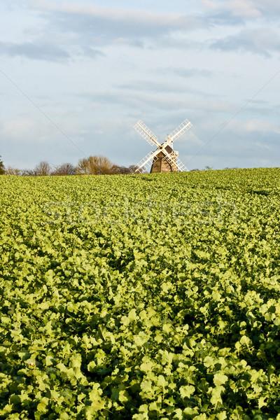 Windmolen cambridge Engeland voorjaar gras natuur Stockfoto © trgowanlock