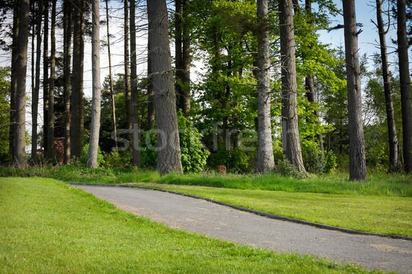 Forest track Stock photo © trgowanlock
