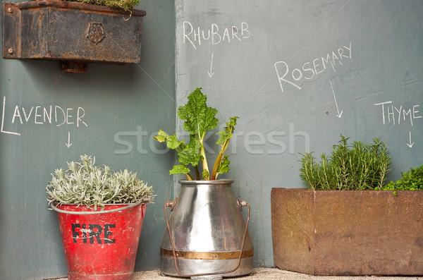 Otlar ilginç göstermek bahar duvar arka plan Stok fotoğraf © trgowanlock