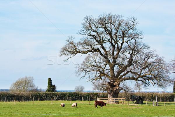 Farm in Suffolk Stock photo © trgowanlock
