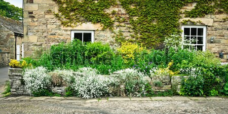 Cottage garden Stock photo © trgowanlock