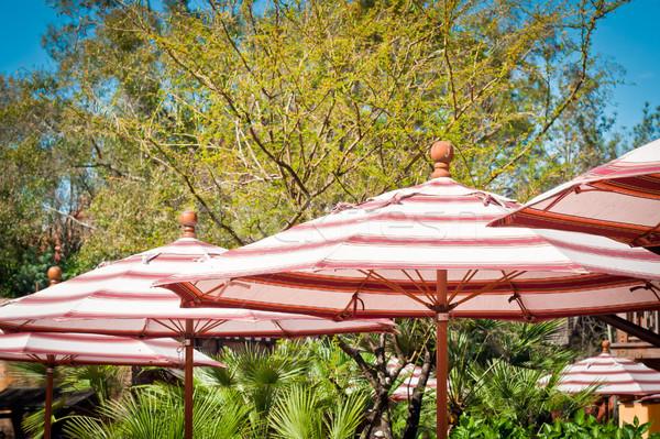 キャンバス 太陽 熱帯 休暇 リゾート ストックフォト © trgowanlock