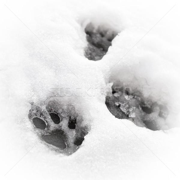 Pata imprimir felino neve gato gelo Foto stock © trgowanlock