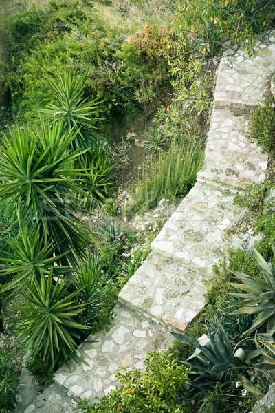 Kert út görög domboldal természet zöld Stock fotó © trgowanlock