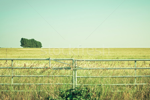 Metal gate Stock photo © trgowanlock