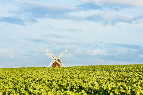 Windmolen voorjaar gras natuur zomer boerderij Stockfoto © trgowanlock