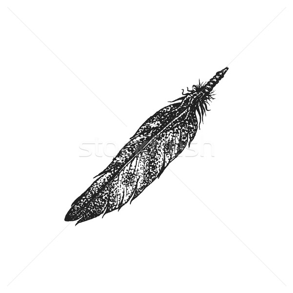 hand drawn indian feather vintage illustration