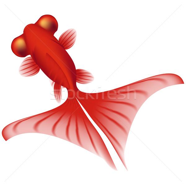 Goud vis oog natuur Rood Stockfoto © tshooter