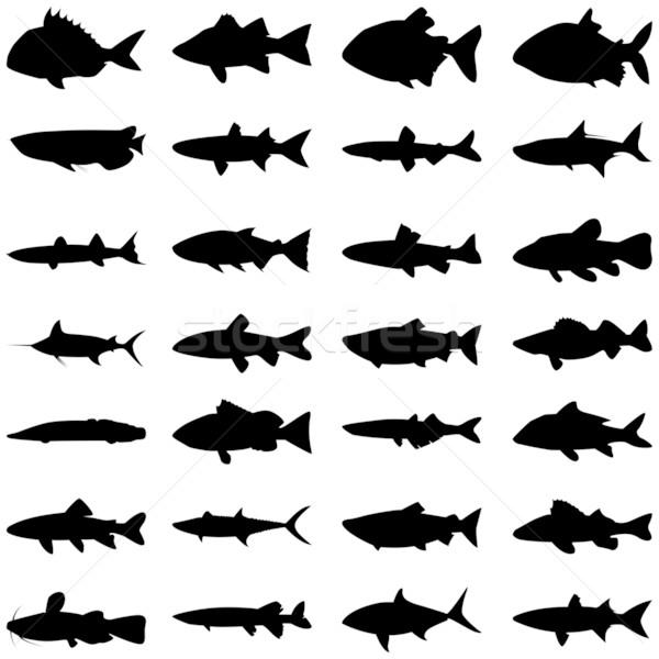 Vis silhouet illustratie vector verschillend natuur Stockfoto © tshooter