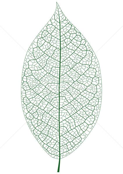 Folha veia árvore verde vida Foto stock © tshooter