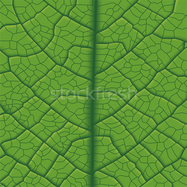 Leaf Vein Stock photo © tshooter