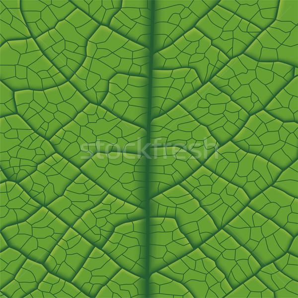 Blad ader groen blad natuur licht Stockfoto © tshooter