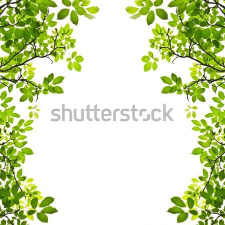 green leaf isolated on white background Stock photo © tungphoto