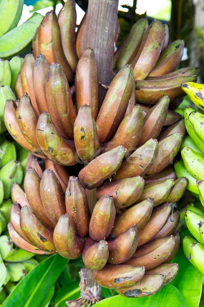 Czarny bananów tajska gatunek drzewo żywności Zdjęcia stock © tungphoto