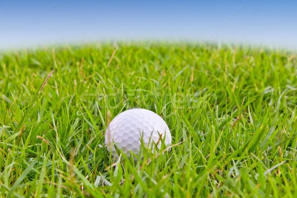 мяч для гольфа высокий трава спорт лет синий Сток-фото © tungphoto