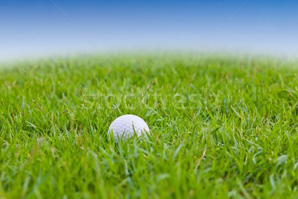 golf ball on grass Stock photo © tungphoto