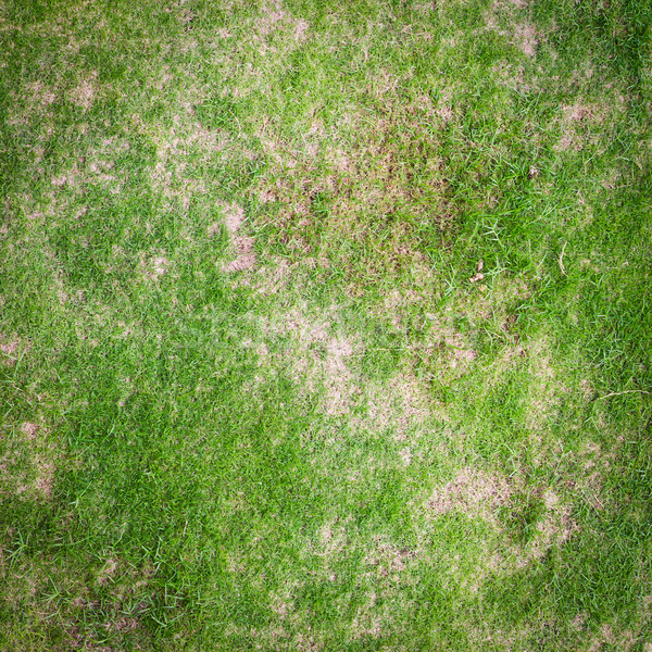 green grass texture for background Stock photo © tungphoto