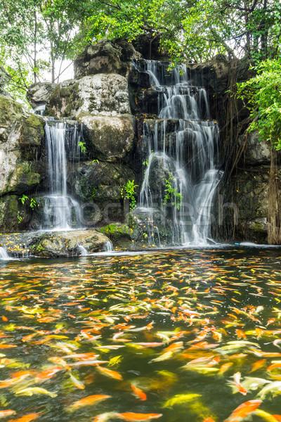Mooie vis water vallen hout blad Stockfoto © tungphoto