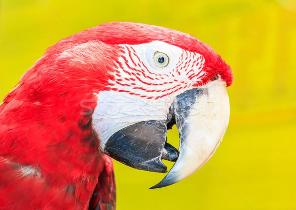 赤 海 芸術 海 鳥 羽毛 ストックフォト © tungphoto