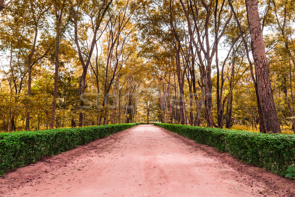 clay road in the national park Stock photo © tungphoto