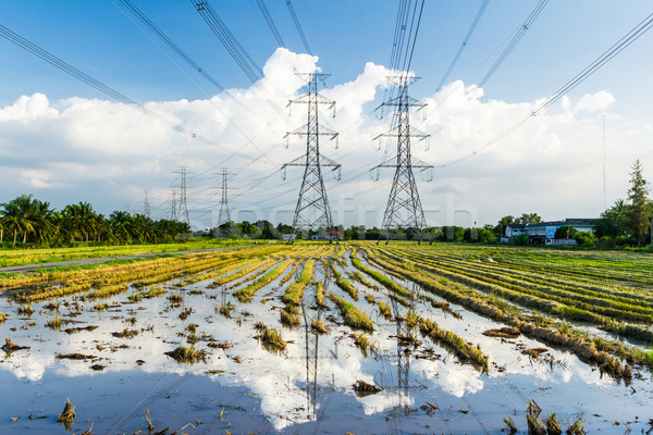 electricity high voltage power post in paddy field Stock photo © tungphoto