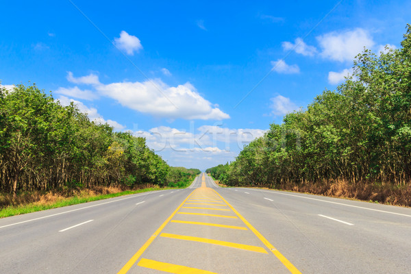 country side road  Stock photo © tungphoto
