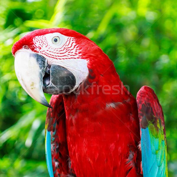 Piros tenger művészet óceán madár toll Stock fotó © tungphoto
