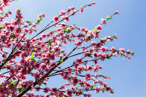 pink flower against blue sky Stock photo © tungphoto