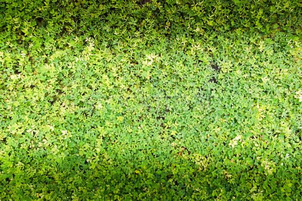 Młodych zielone roślin żywności charakter zdrowia Zdjęcia stock © tungphoto