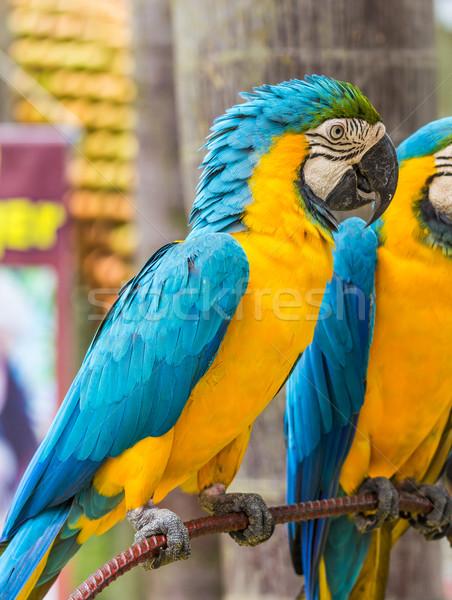 自然 青 羽毛 赤 無料 美しい ストックフォト © tungphoto