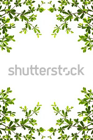 Foto stock: Verde · isolado · branco · primavera · jardim