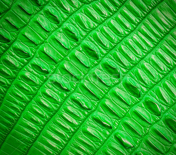 green crocodile skin texture Stock photo © tungphoto