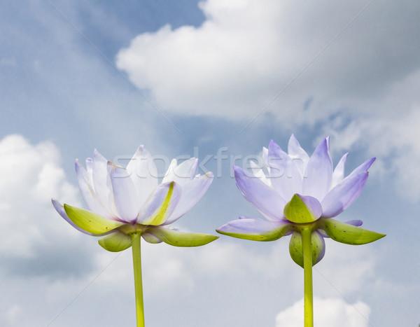 Iker lótusz kék ég virág víz természet Stock fotó © tungphoto