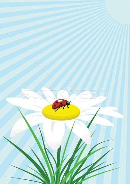 Ladybug sitting on the chamomile against blue background. Stock photo © tuulijumala