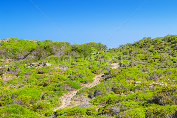 ösvény körül sziget zöld dombok Spanyolország Stock fotó © tuulijumala