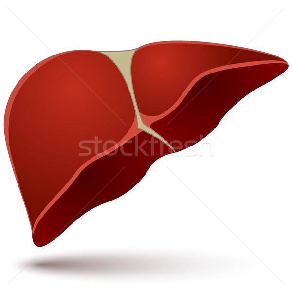ストックフォト: 人間 · 肝臓 · 孤立した · 白 · 医療 · 健康