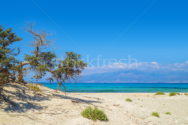 Chrisi (Chrysi) island background with weird lebanon cedar. Stock photo © tuulijumala