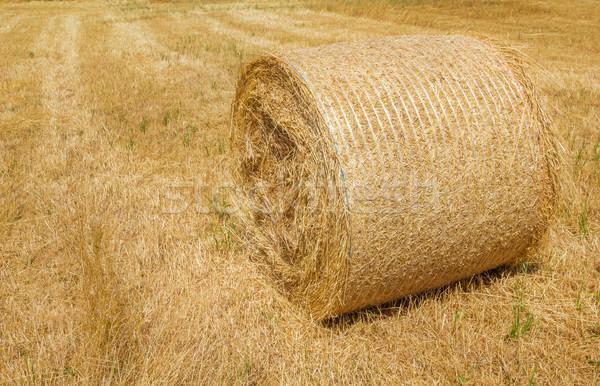 Harvested dry yellow straw roll on the farmland. Stock photo © tuulijumala