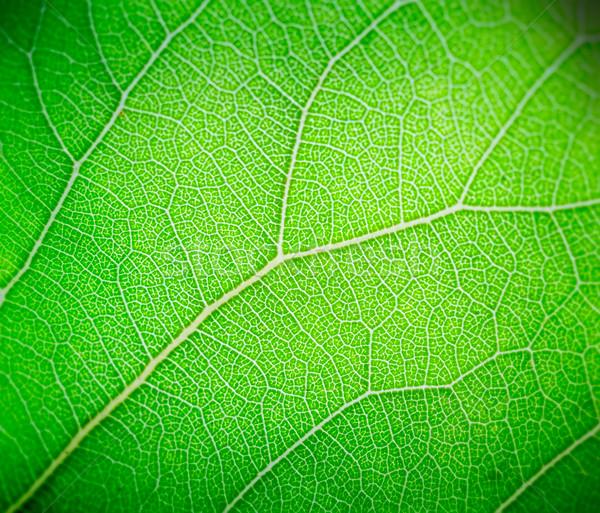 薄緑 葉 マクロ ツリー 春 庭園 ストックフォト © tuulijumala