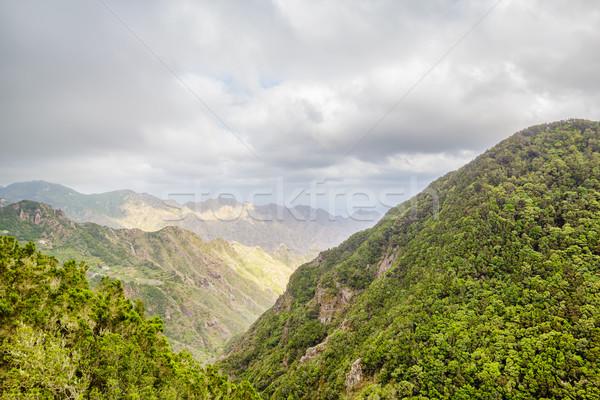 Natuurlijke park tenerife eiland Spanje wolken Stockfoto © tuulijumala