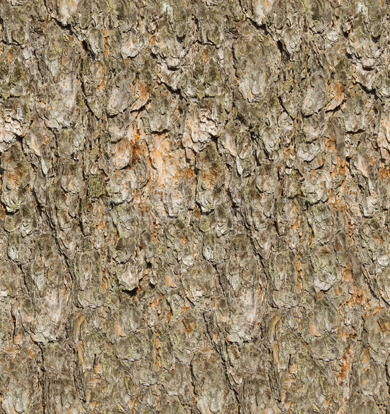 сосна Кора бесшовный текстуры аннотация природы Сток-фото © tuulijumala