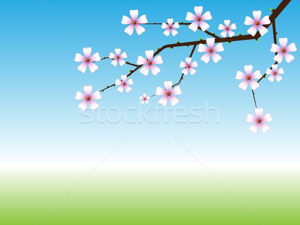 весны копия пространства цветок природы Сток-фото © tuulijumala