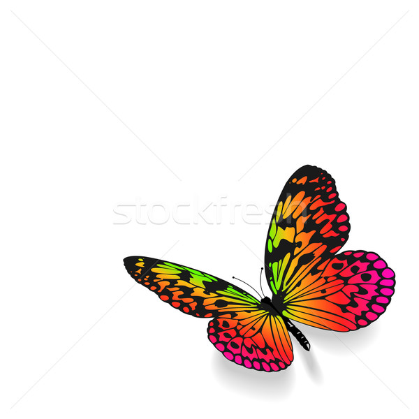 Colorful butterfly on white background. Stock photo © tuulijumala