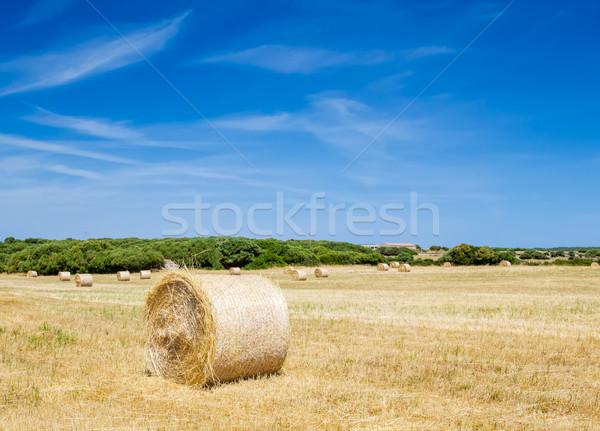 Szalmaszál zsemle bála farm napos idő Spanyolország Stock fotó © tuulijumala