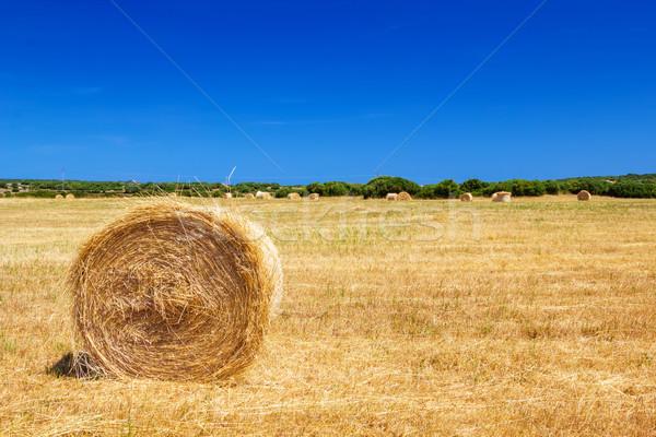 Straw roll bale on the farmland in sunny day at Menorca, Spain. Stock photo © tuulijumala